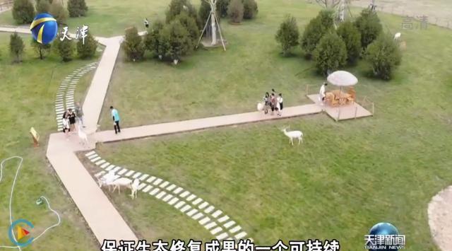 天津电视台重磅报道 亿利让盐碱地变身生态绿洲