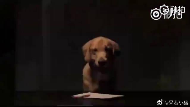 这是狗狗临死前写给主人的一封道歉信……