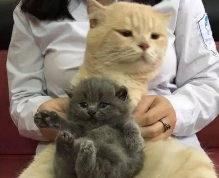 猫爸喜得贵子,可是看这小奶猫,猫爸竟一脸嫌弃