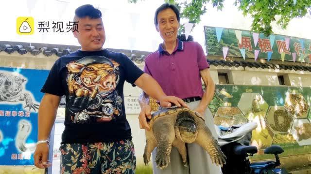 外来物种不能放生!男子将27斤龟儿子送给动物园