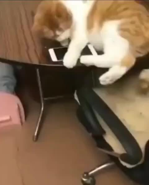 猫:当时我真的很慌这个玩意比我还贵