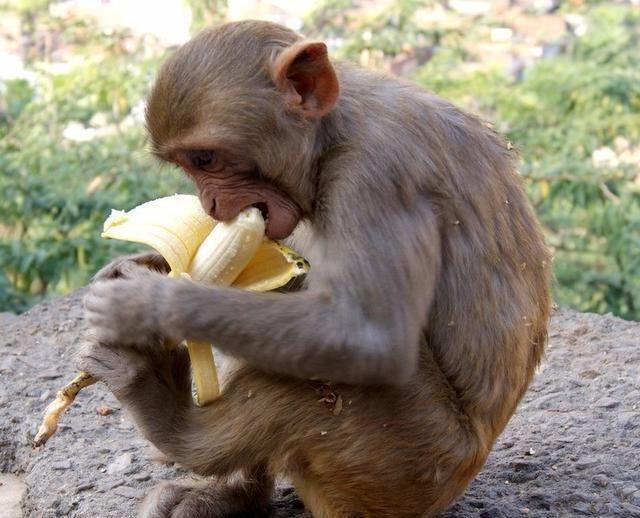 香蕉通便效果一般,它才是王者,排便困难就靠它