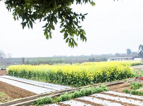 莆田市提升农村人居环境,2020年底完成90%以上的村庄整治