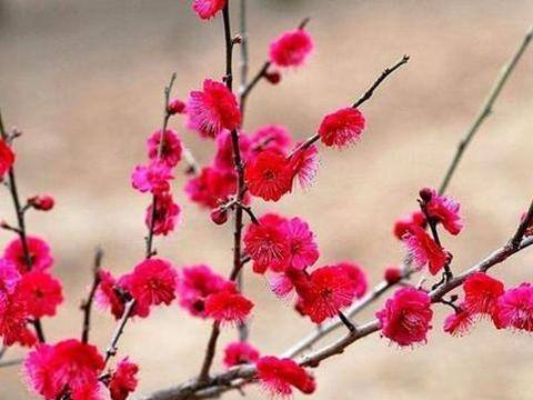 苏轼8首鲜为人知的诗词,能读过三首就算知识渊博了!