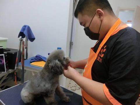 现在学习宠物美容师有前途吗