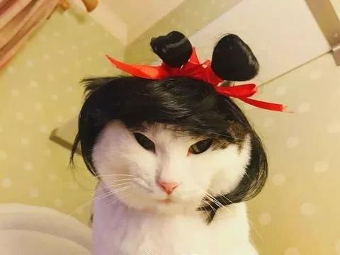 听说这款发型瘦脸,对大脸猫毫无作用呢,是不是被骗了