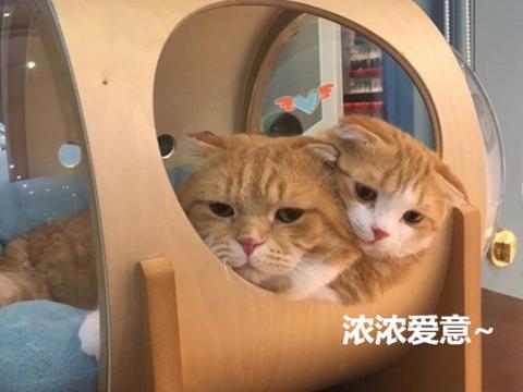 猫咪一家三口太幸福,羡煞主人这单身狗,主人:待不下去了