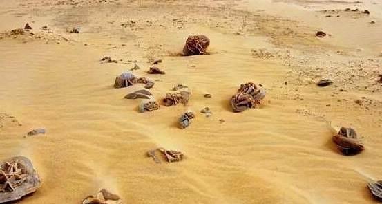 """为何去沙漠游玩看到""""石头""""千万不要错过?导游:捡到就发财了!"""
