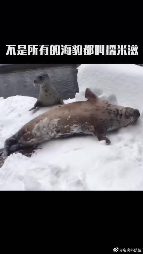"""南极顶级掠食者没想到是它!不是所有的海报都是""""糯米糍""""……"""