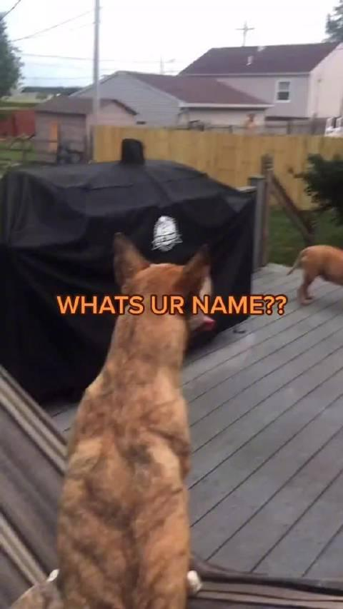 你叫什么名字