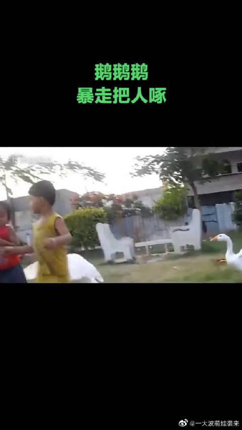 据说,每个农村孩子的童年都有一只难忘的鹅