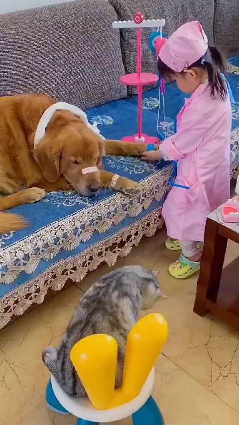 有了孩子以后狗也不拆家了,猫也不挠墙了……
