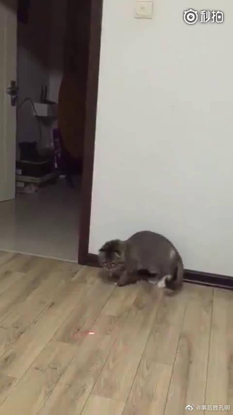 这主人懒到一定境界了,猫咪:妈的智障,下辈子再也不当你的猫了