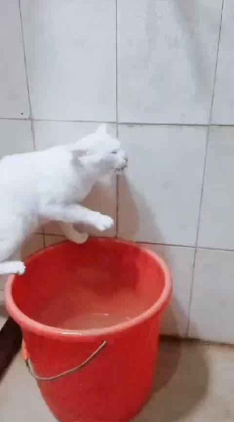 领养出去的小小白不爱喝自己猫碗里的水……
