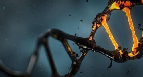 儿子像妈妈,女儿像爸爸?用基因来告诉你孩子长相取决于谁