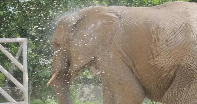 自动感应冲凉 恒温水池游泳……北京动物园开启防暑降温模式