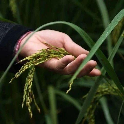 """联合国:前所未有的粮食危机正在迫近!中国情况如何?要""""囤粮""""吗?"""