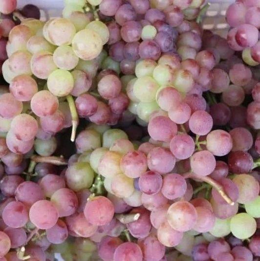 助农团团丨息烽潮水村500余亩葡萄成熟了