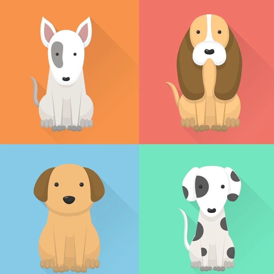 注意啦!文明养犬新规来了,你的爱犬需要……