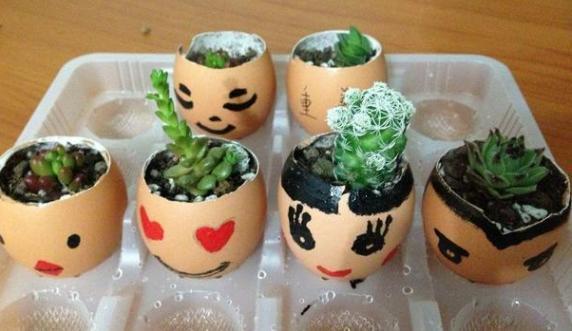 该如何用鸡蛋壳养花?掌握正确方法,肥效翻倍,还能当花盆育苗