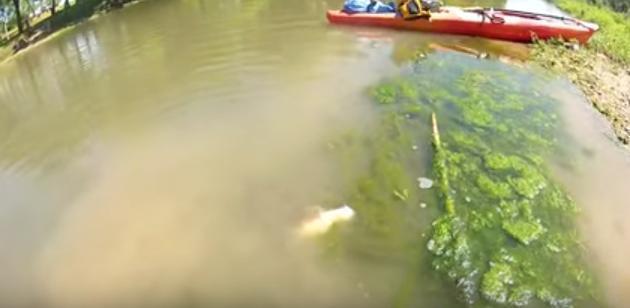 男子钓鱼时发现湖里有异响,走近后吓的连忙跑开