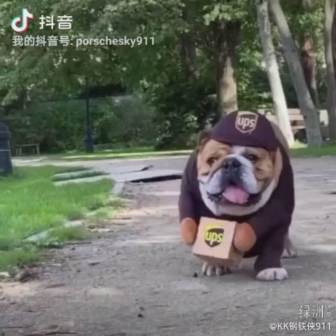 狗子:我不要面子的? 哈哈哈哈各种恶搞酷狗的服装,ups快递狗
