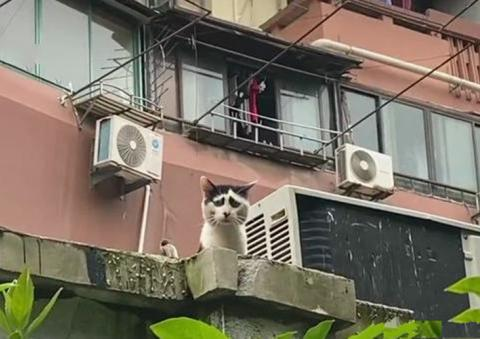 女子发现自己被猫咪盯上了,觉得还挺荣幸的,看清长相后:打扰了