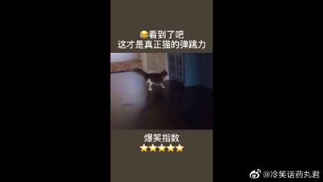猫:厉不厉害!让你们见识下真正猫的弹跳力!