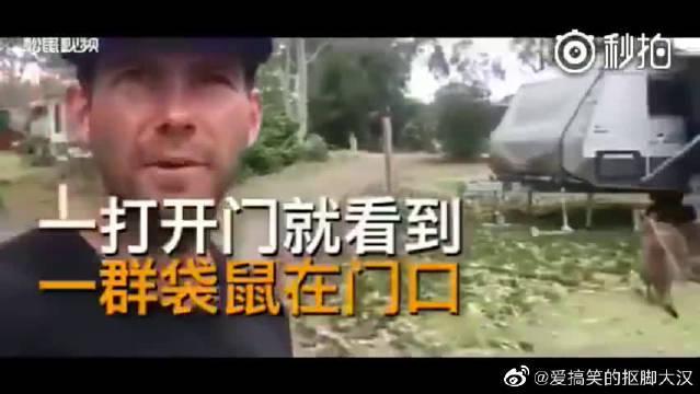 外国网友让袋鼠参观了自己的房车之后……
