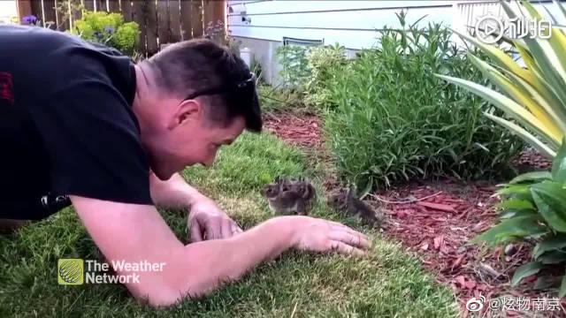 网友在家中的花园里发现了一窝小兔子……