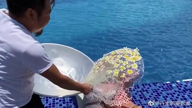 在游泳池旁边拍照的情侣,还能享受鲜花沐浴的感觉……