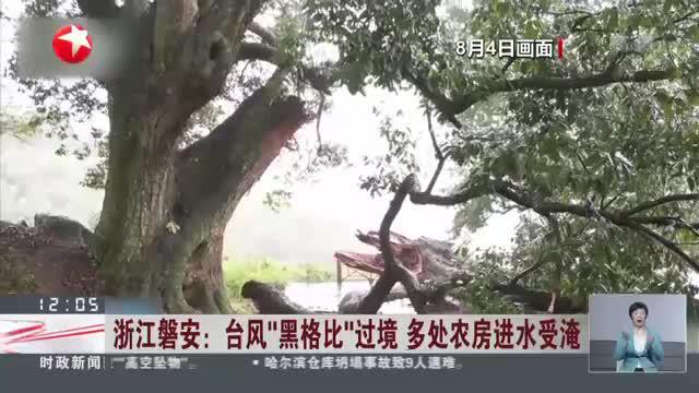 """浙江磐安:台风""""黑格比""""过境  多处农房进水受淹"""
