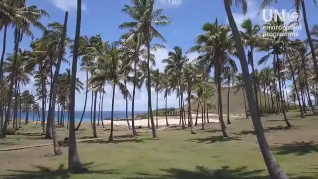 的影响甚至波及到了距离智利大陆3500公里的偏远岛屿复活节岛(Rapa Nui)