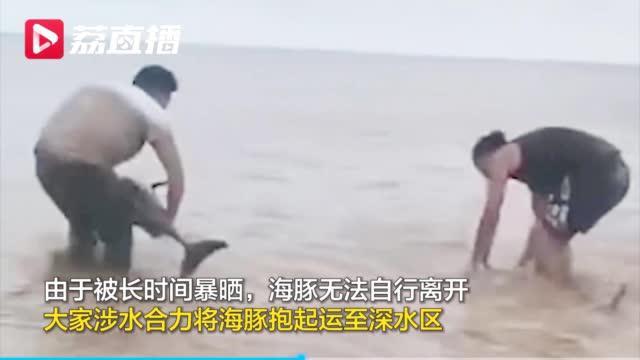 盐城 三只海豚搁浅渔政边防联手解救