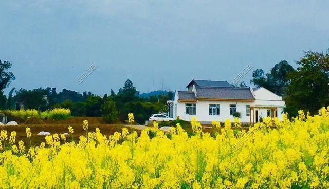 20万建座新中式小院,回农村养鱼、喝茶、栽花种菜,你愿意吗?