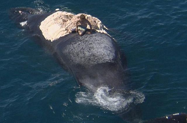 男子乘船出海游玩, 海面上发现鲸鱼尸体, 跳上去后把他吓坏了