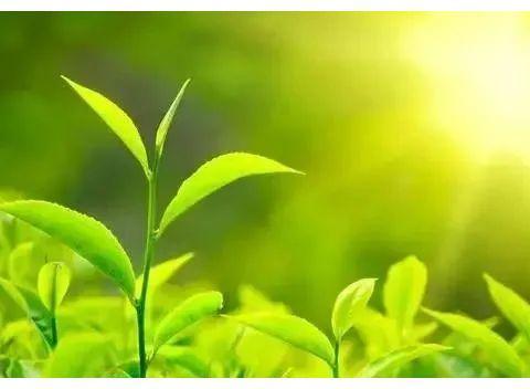 散文:宁静的阳光