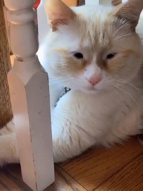 真是万万没想到 猫咪也像李荣浩