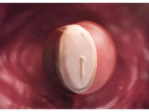 """胎儿在妈妈肚子里有""""两怕"""",孕早中晚期各不同,孕妈要分别注意"""