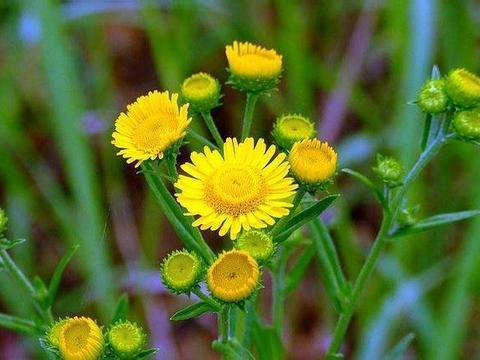 新手想养护花卉,购买哪种规格的花卉更适合自己,看看区别再选择