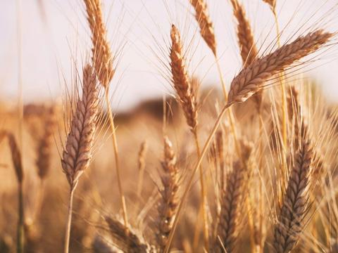 中国小麦进口额创下七年来最高水平,背后释放出什么信号?