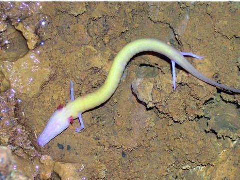 男子洞穴里发现奇怪生物, 仔细看却把他吓坏了