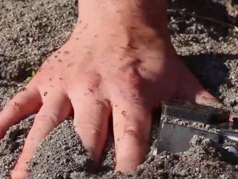 男子把手伸进土里,然后被一群小动物咬了,最后自作自受了