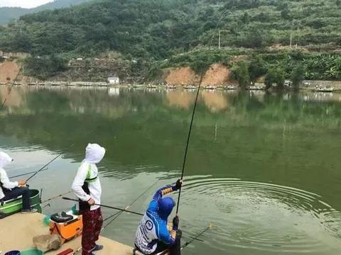 钓草鱼鳊鱼混养饵料新思路,成本几元钱,轻松破百斤