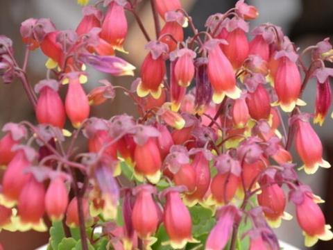 养花就养这几款,花朵小巧玲珑,埋土里就活,给点水就疯长