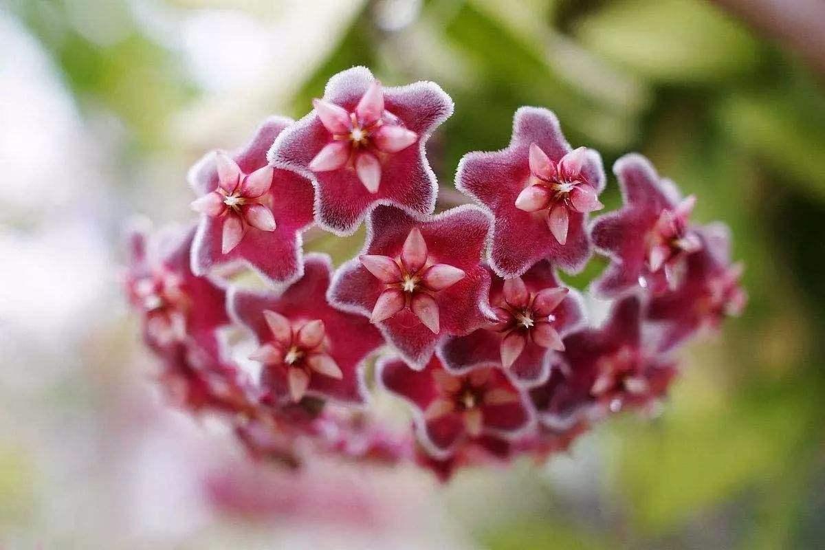 几种垫花盆的宝贝,养花透气不烂根,让花卉生长旺盛!