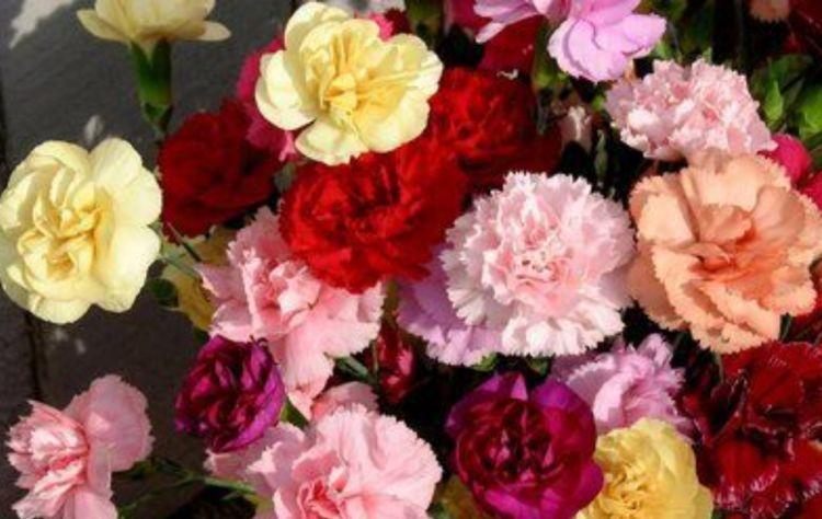 """4种漂亮花,好养易活能爆盆,一入8月变成""""开花机器"""",花朵艳丽"""
