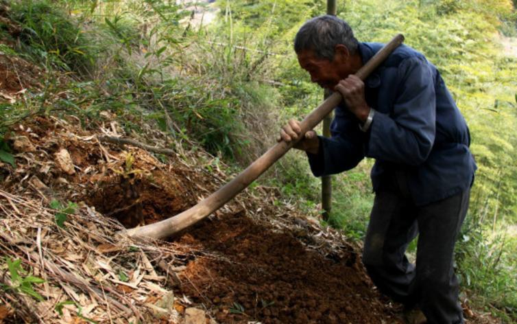 老汉山上捡到一块龙形木头,以为是宝贝,专家鉴定后不淡定了