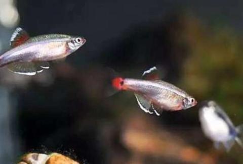 观赏鱼患病,哪种鱼药最好用,为什么老鱼友很少使用过多鱼药?