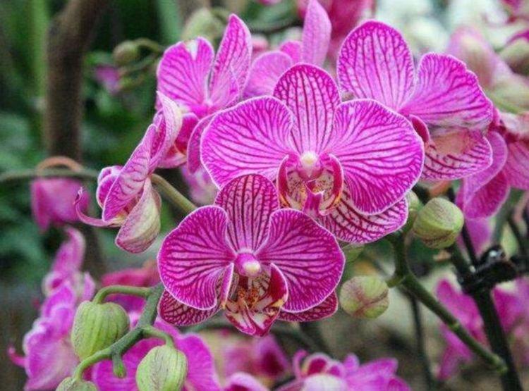 3款艳美的花卉,净化空气,开花不断,懒人新手都能养好!
